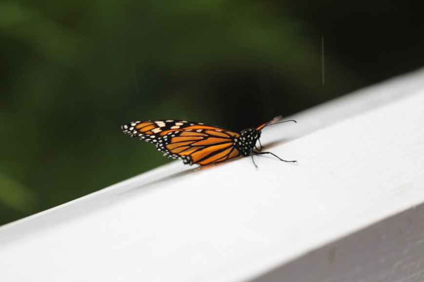 Then came Mom, Betty's surprise! We released butterflies